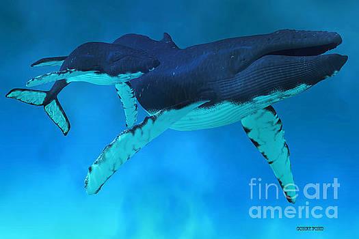 Corey Ford - Humpback Whale Ocean