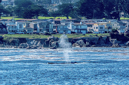 Humpback Whale Pacific Grove, California 2 by Randy Straka