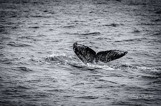 Humpback Whale Tail by Roxy Hurtubise