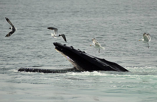 Humpbacks and Terns by Rick Frost