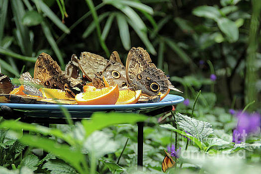 Hungry Butterfly Buffet by Linda Joyce