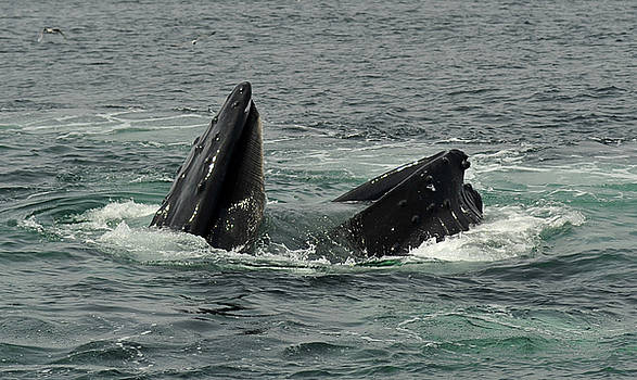 Hungry Humpback by Rick Frost