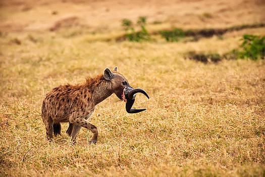 Adam Romanowicz - Hungry Hyena