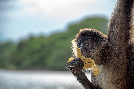 Hungry Monkey by Michael Santos