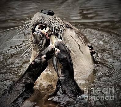 Paulette Thomas - Hungry River Otter