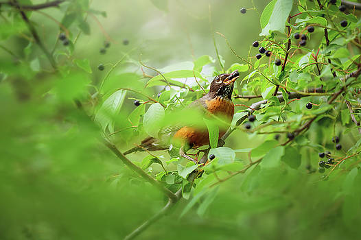 Hungry Robin by Debby Herold