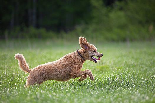 Hunting Dog by Teemu Tretjakov