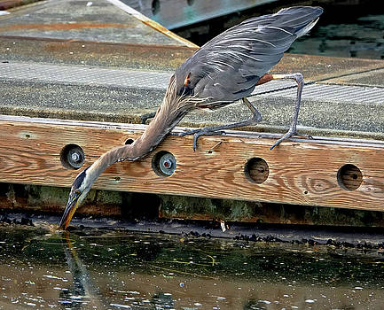 Hunting Heron by Rick Lawler