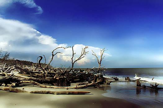 Hunting Island by Jessica Brawley