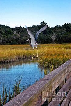Huntington Beach Heron II by Jeff McJunkin