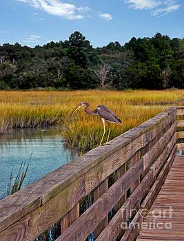Huntington Beach Heron by Jeff McJunkin