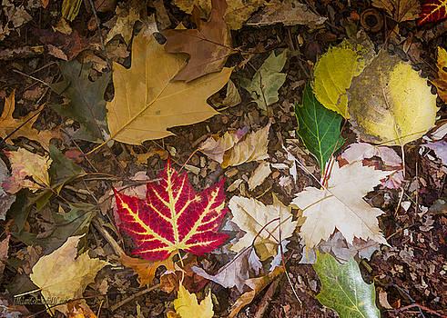 LeeAnn McLaneGoetz McLaneGoetzStudioLLCcom - Huron County Nature Center Leaves