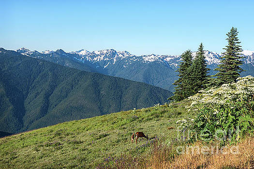 Hurricane Ridge by Sharon Seaward