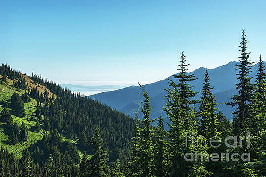 Hurricane Ridge View by Sharon Seaward