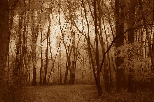Hush by Thomas  MacPherson Jr