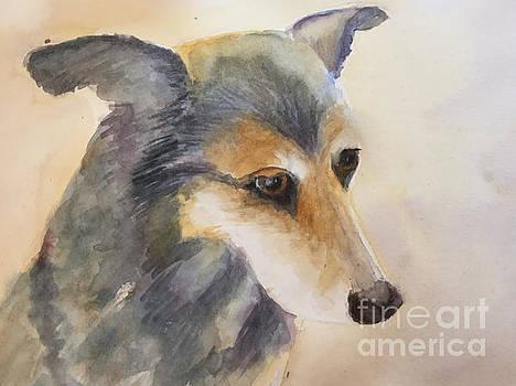 Husky Mix by Yohana Knobloch
