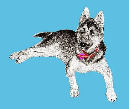 Jack Pumphrey - Husky Puppy Bella
