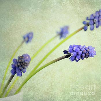 Hyacinth Grape by Lyn Randle