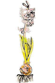 Hyacinth  by Jennifer Reyna