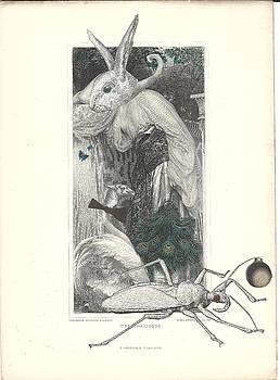 Hybrid Bunny by Linnie Greenberg