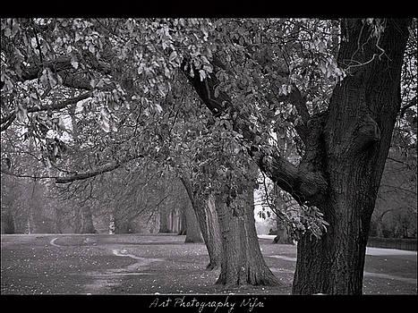 Hyde Park in London by Nicole Frischlich