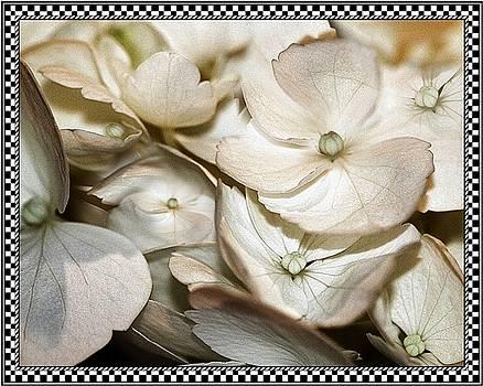 Hydrangea Blossom 2 Framed by Andrea Lazar
