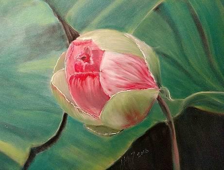 Hydrangea bud by Joan Mansson