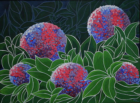 Hydrangea Grandiflora by Paul Amaranto