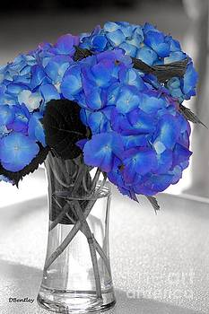 Hydrangea In glass by Donna Bentley