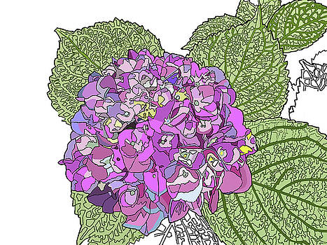 Hydrangea by Jamie Downs