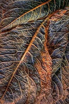 Nikolyn McDonald - Hydrangea Leaves - Left