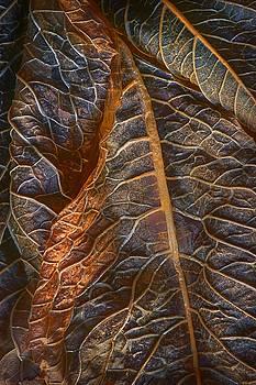 Nikolyn McDonald - Hydrangea Leaves - Right