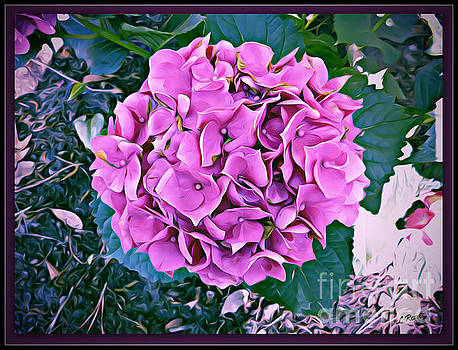 Hydrangea by Leslie Revels