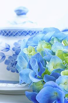 Hydrangea Memories by Nancy Kirkpatrick