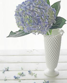 Hydrangea on White by Terri Tiffany