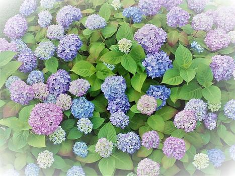 Hydrangea Play by Ann Johndro-Collins