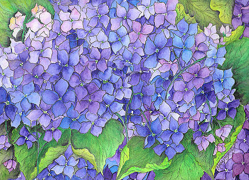 Hydrangea Purple Blue by Meldra Driscoll