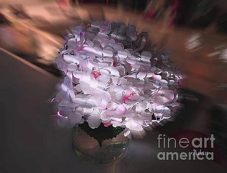 Felipe Adan Lerma - Hydrangea Swirl