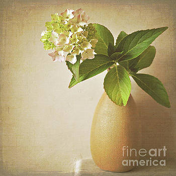 Hydrangea with leaves by Lyn Randle