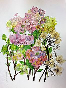 Hydrangea's Changing Colours by Barbara Anna Cichocka
