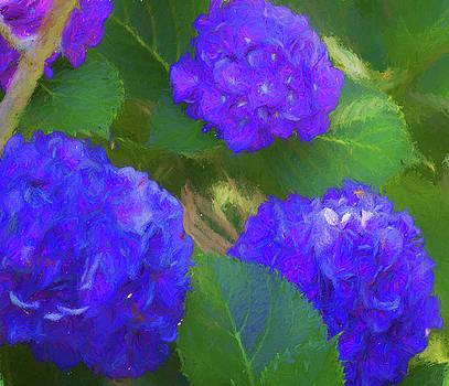 Hydrangeas in Purple  by Kathy Clark
