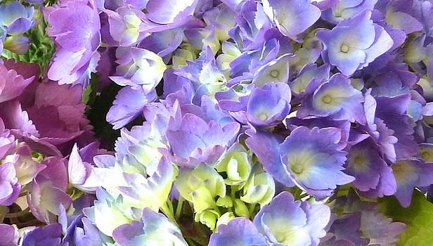 Hydrangeo Bloom III by WDM Gallery