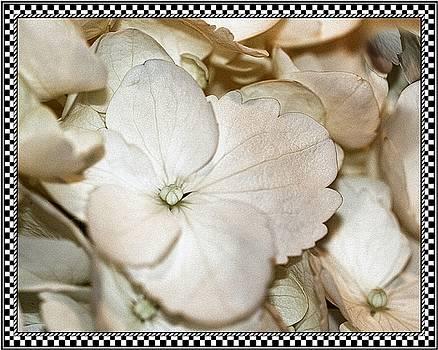 Hydrengea Blossom 3 Framed by Andrea Lazar