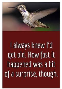 I Always Knew I'd Get Old by Jay Milo