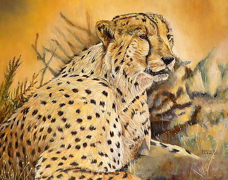I am Cheetah by Marilyn  McNish