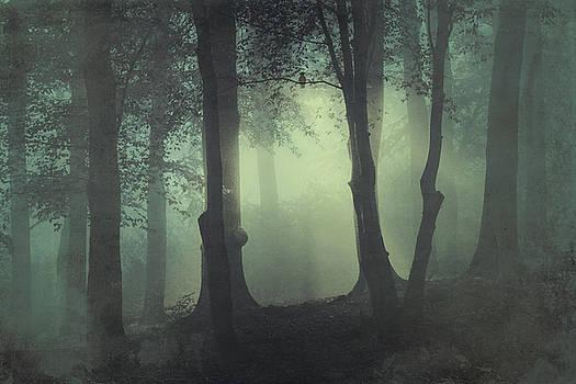 I am not my usual self - foggy forest by Dirk Wuestenhagen