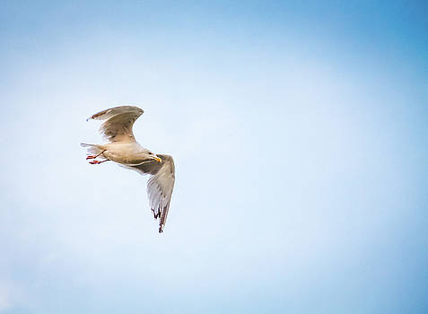 I Believe I Can Fly by Joel Witmeyer