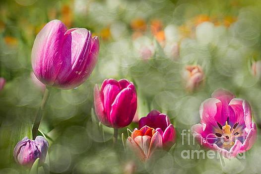 I Choose Spring by Marilyn Cornwell