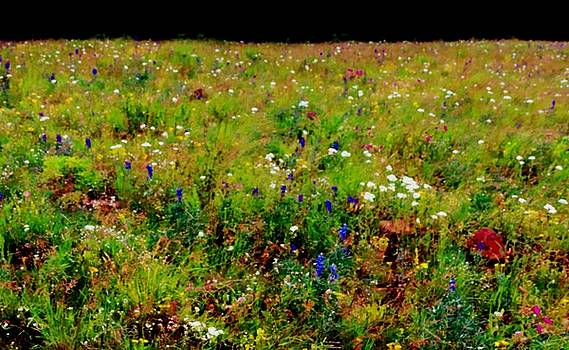 Leah Grunzke - I Dream of Meadows in Summer