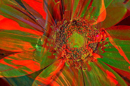 I dreamed of flowers  by Jeff Swan